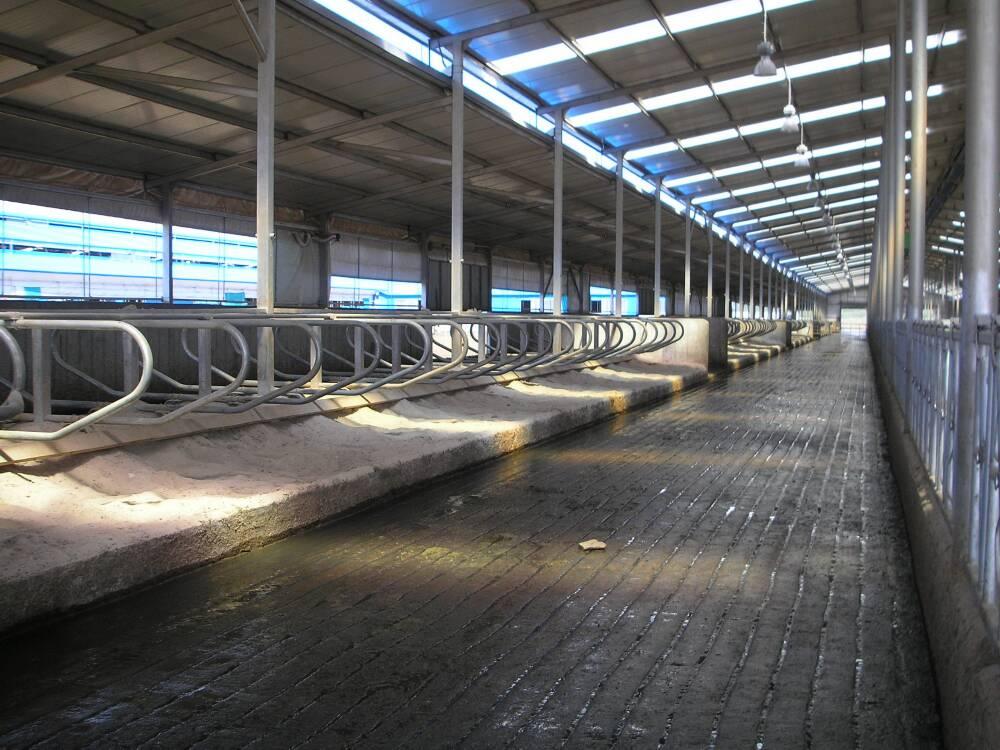 牛舍设计图 钢结构